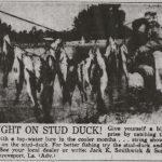 The Stud Duck